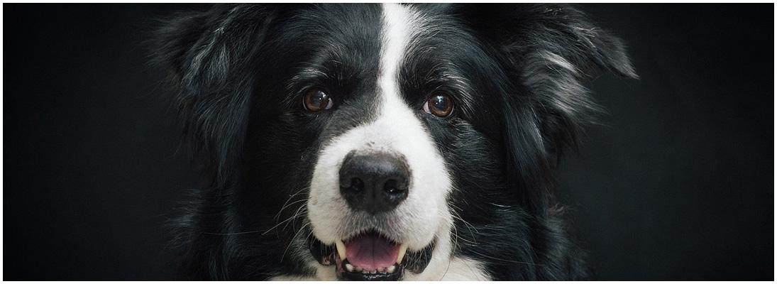 Tierfotografie Giessen - Fotowerkstatt Lich